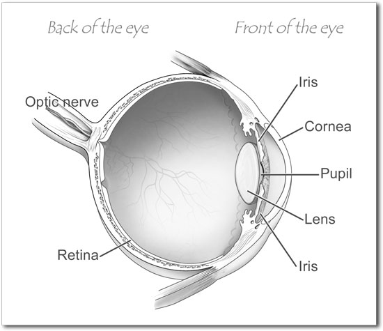 back of the eye disease and treatment